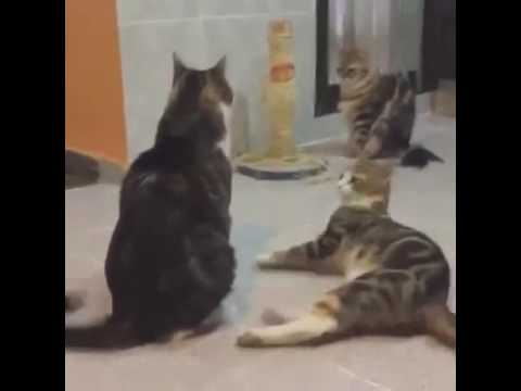 cats meet spongebob (extended tail and leg edition)