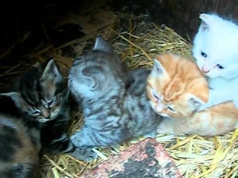 Kittens For Sale Doncaster South Yorkshire