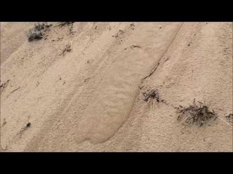 Grain flow in dry eolian sand