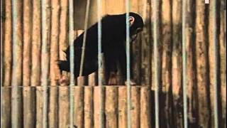 Safari serial 1986 - cast 1.