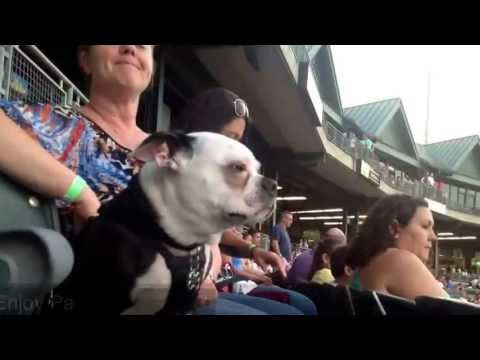 Bark in the Park - July 23rd presented by Chasing Dreams, LLC, Animal Massage and Photonic Therapy