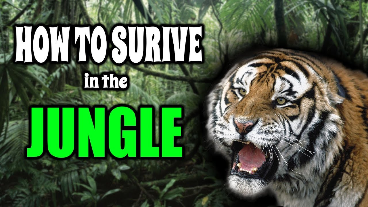 ADVISER: Things To Bring In The Jungle