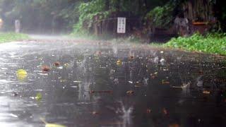 10시간 한적한 도로에 내리는 비오는 풍경, 빗소리 a…