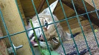 """Погладь кота! - в гостях в центре реабилитации животных """"Сирин"""""""
