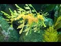 Monterey Bay Aquarium: Secret Lives of Seahorses