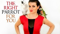 PARROT TALK #4 How To Choose The Right Parrot For You