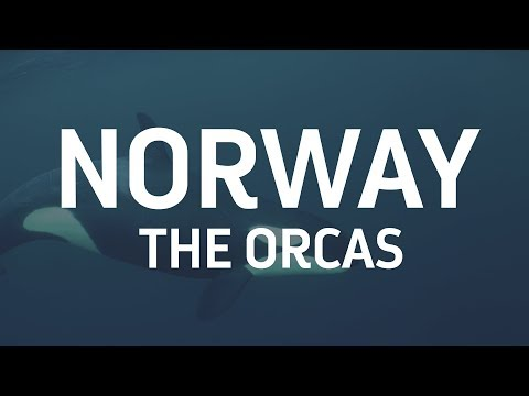 Part Two: The Orcas Of Northern Norway