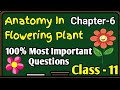 Anatomy in Flowering plant Biology Class 11 Chapter 3  Most Important Question  CBSE NCERT KVS ICSE