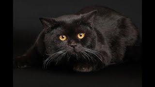 День чёрной кошки