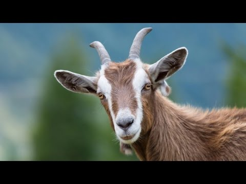 antelope sounds download