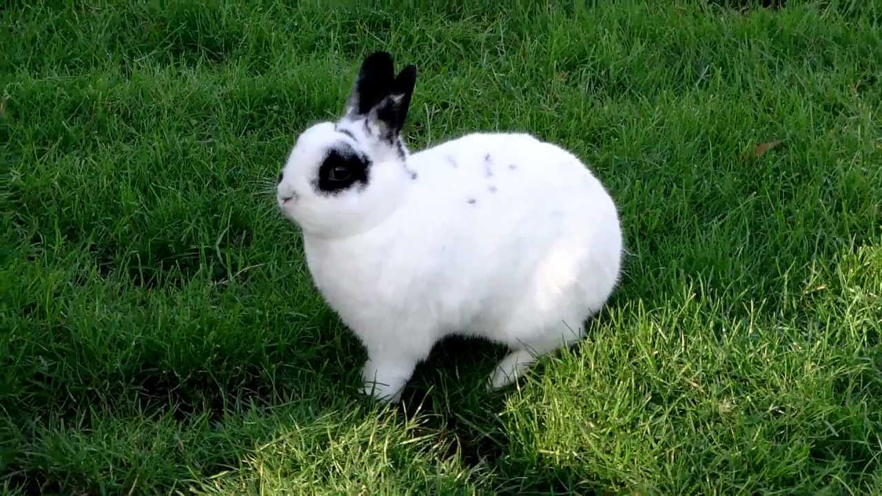 Cute White Rabbit With Black Eyes