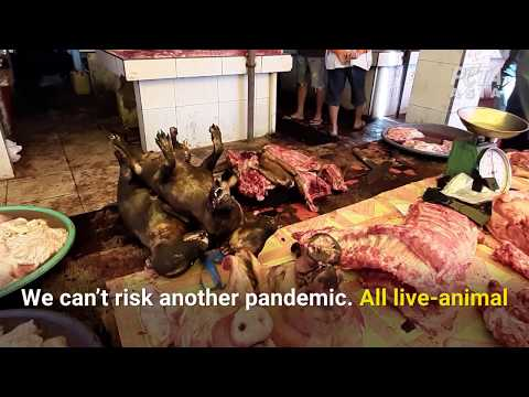 See Inside 'Wet Markets' Operating NOW, Where Diseases Like COVID-19 Originate