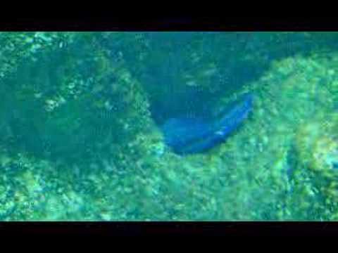 Aquarium Roquetas De Mar Youtube