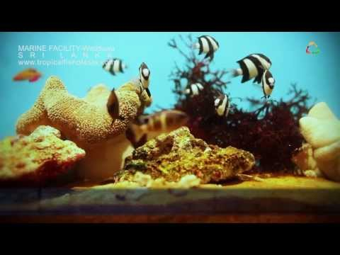 Tropical Fish International Pvt. Ltd - Marine Fish Varieties