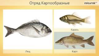 видео Рыбы и их значение в мире