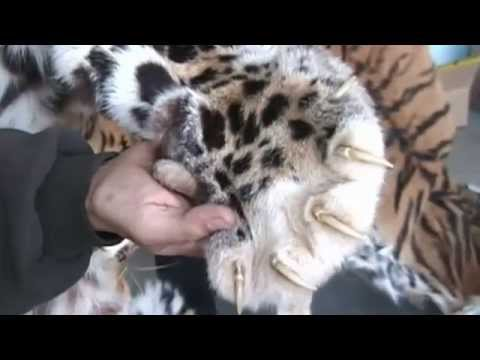IFAW Russia 20th Anniversary Video