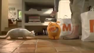 реклама про кошку и копилку