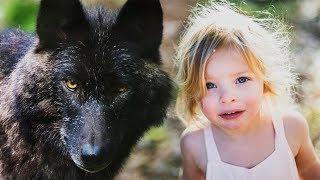 Волк отомстил, но оказался благородней человека!