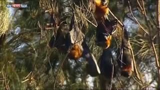 غزو للخفافيش في وضح النهار