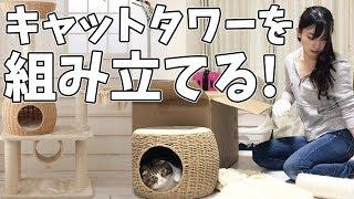 ぽこ太郎のために新しいキャットタワーを組み立てる