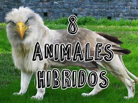 8 animales hibridos
