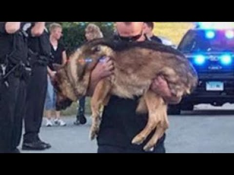 Connecticut police department says goodbye to K9 officer