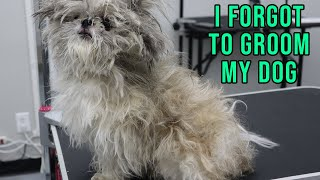Safely Groom Your Matted Dog
