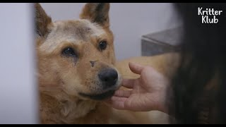 The Shocking Story Of Dogs Who Barely Escaped From Animal Abuse (Part 2) | Kritter Klub