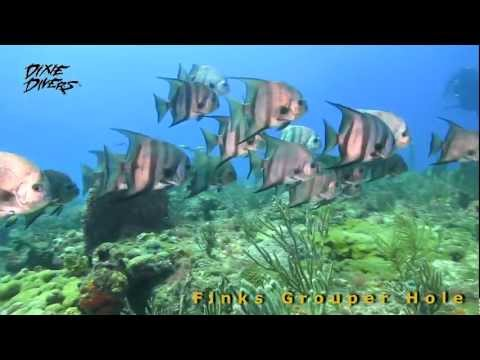 Finks Grouper Hole - Dive with Lady Go Diver