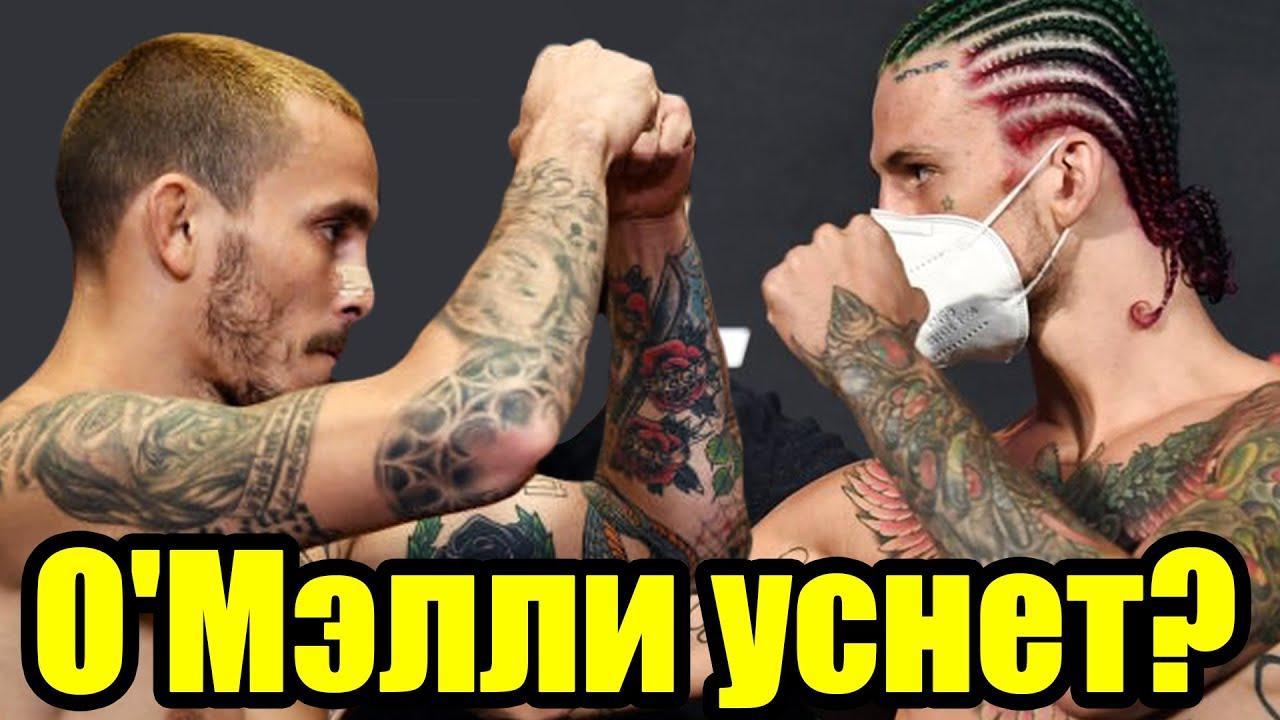 МОЩНЫЙ РАЗБОР! Шон О'мэлли vs Марлон Вера / Прогноз к UFC 252