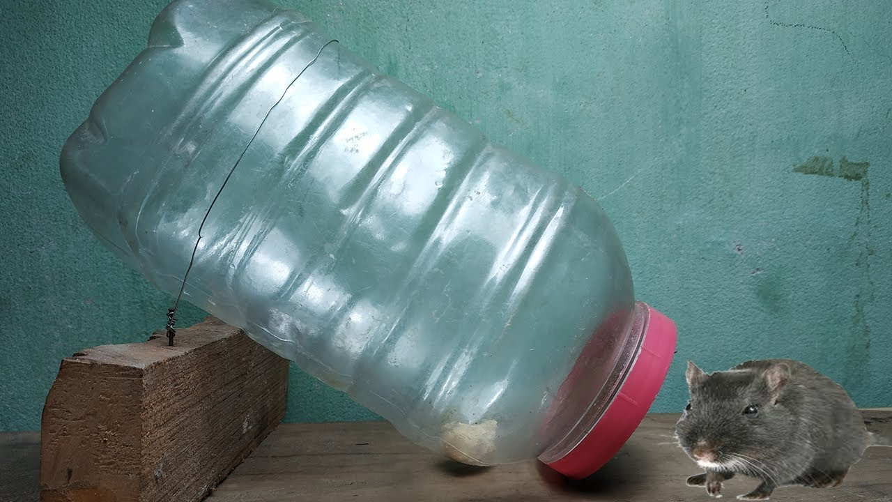 mouse trap made from plastic bottle,water bottle mouse rat trap,make rat  trap at home