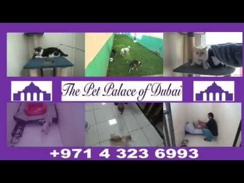 the-pet-palace-of-dubai---kennel-and-cattery