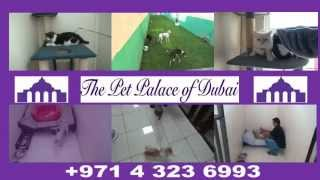 The Pet Palace of Dubai - Kennel and Cattery