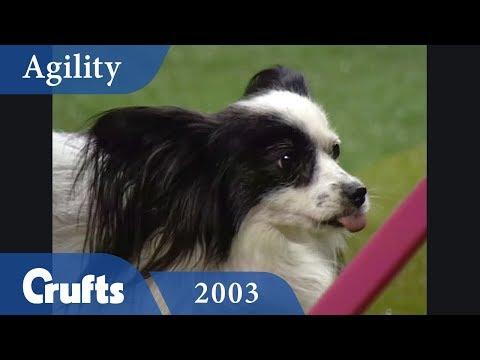 Eukunuba Mini Agility Challenge from Crufts 2003 | Crufts Classics