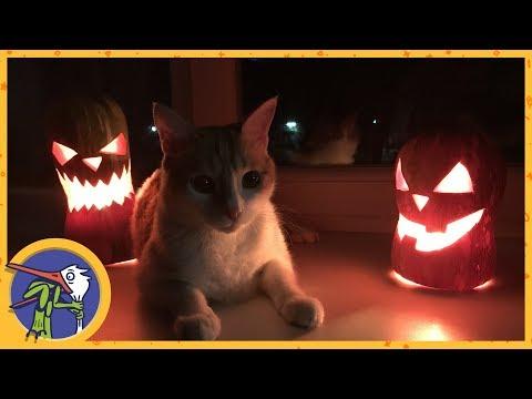 Пранк на Хеллоуин с огромным пауком: что-то пошло не так!