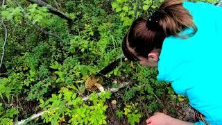 видео Сбор грибов