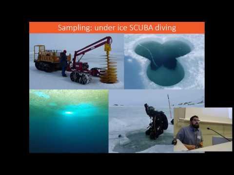 Loïc Michel - Increased sea ice cover disrupts food web structure in coastal Antarctica