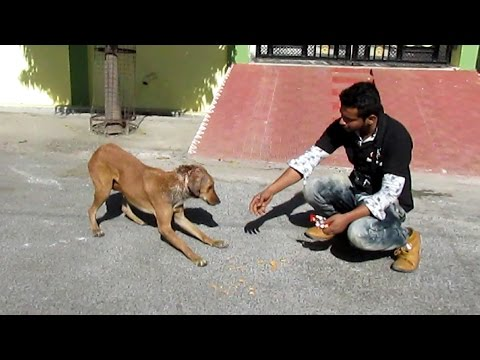 Rescue of a shy & wounded street dog