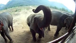 Download Video New Year Sun Bear - Southeast Asia (Ft. Boudi) MP3 3GP MP4