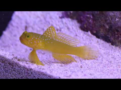 Red Sea Reefer Pt14: First Fish And Inverts