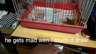 My bird gets mad wen I touch d draw