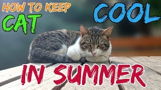 How To Keep Your Cat Cool In Summer 2019 Hindiurdu