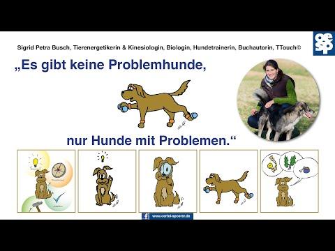 Es gibt keine Problemhunde, nur Hunde mit Problemen!   Das Tao der Hunde   von Sigrid Petra Buschиз YouTube · Длительность: 8 мин8 с