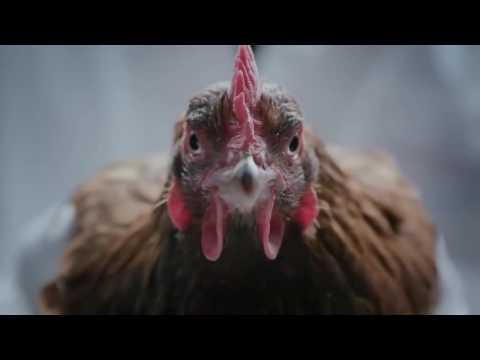 Реклама мерседеса курицами
