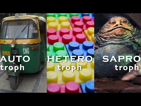 Autotroph Heterotroph Saprotroph [Class 7, Chapter 1, Nutrition in Plants, NCERT]