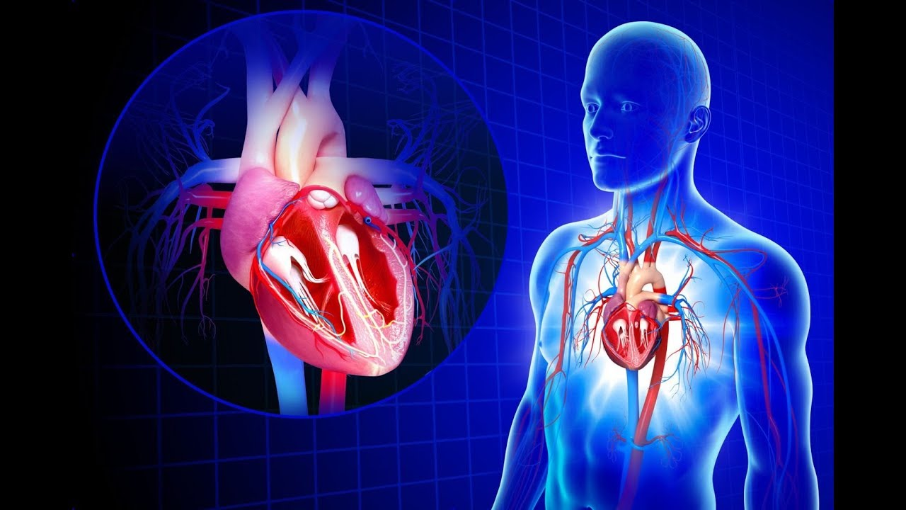 Cardiovascular System: Anatomy Review The Heart - YouTube
