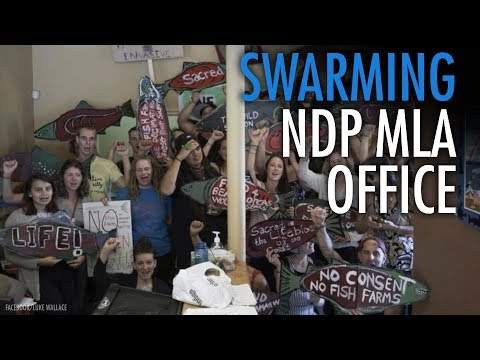 Salmon farm occupations expand into NDP MLA offices