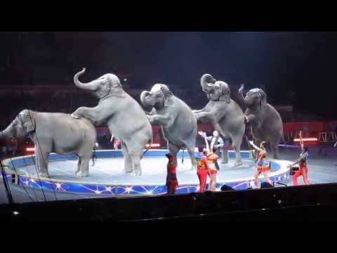 Ringling Brothers Circus - Cruelty to Elephants - Sept 1, 2014