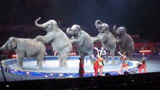 Ringling Brothers Circus  Cruelty to Elephants  Sept 1, 2014