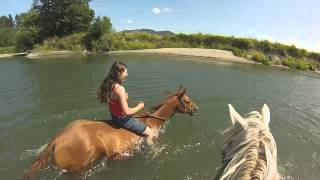 Swimming with horses in the Stillaguamish: August 2014